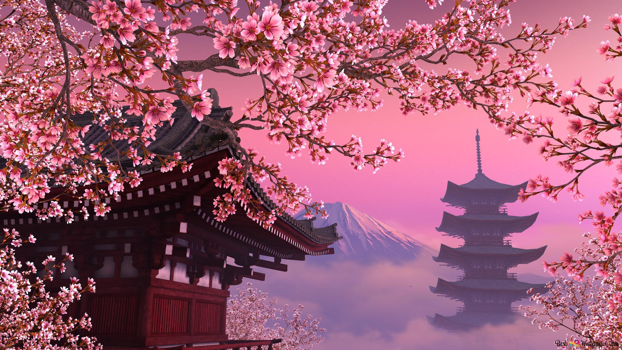 Descargar fondo de pantalla flor de cerezo HD