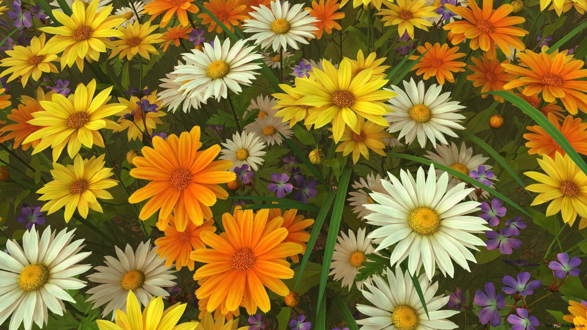 Fondos De Pantalla Hd Flores: Descargar Fondo De Pantalla Flores De Verano HD