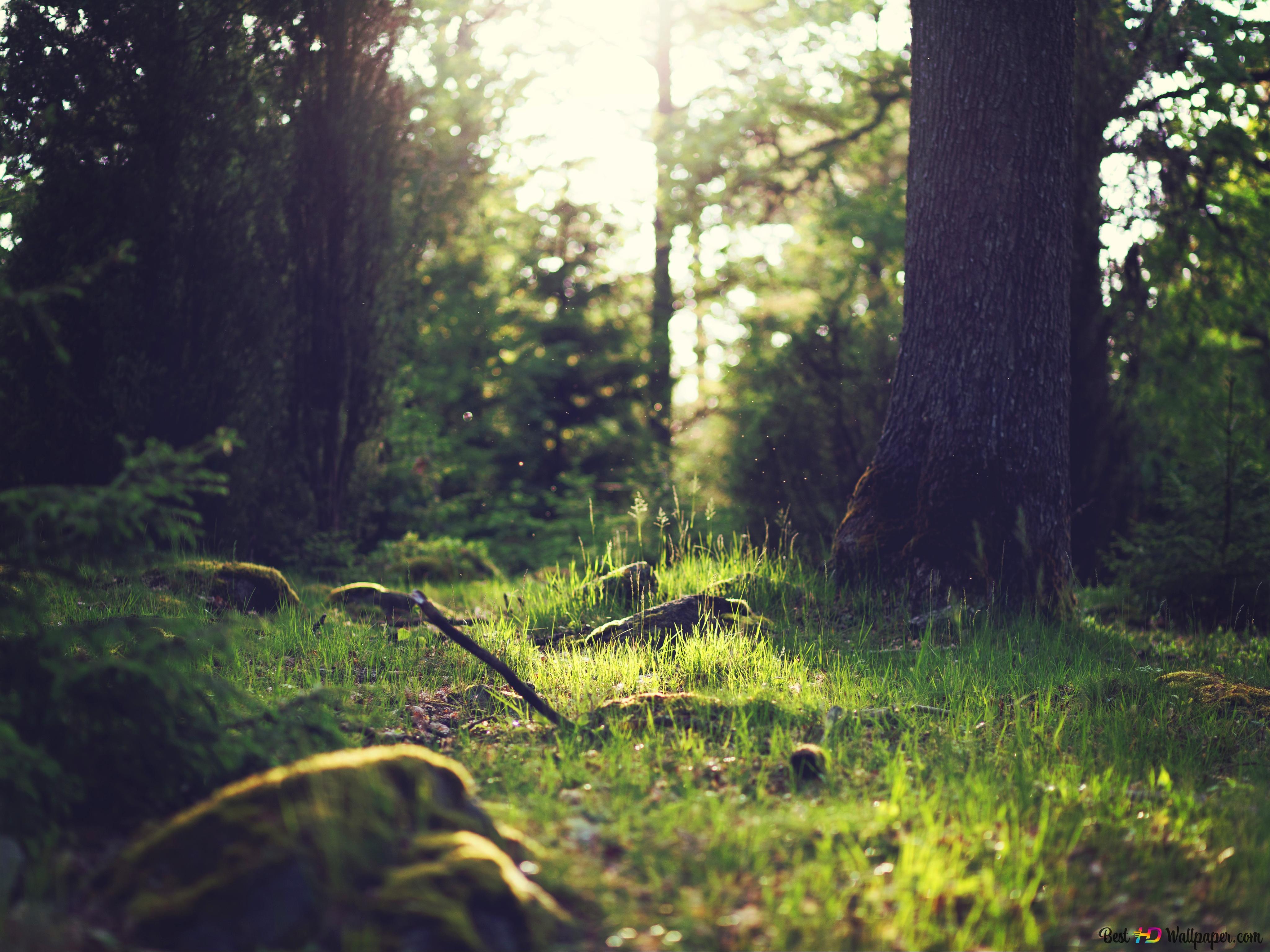 foto de fond de paysage de forêt verte HD fond d'écran télécharger