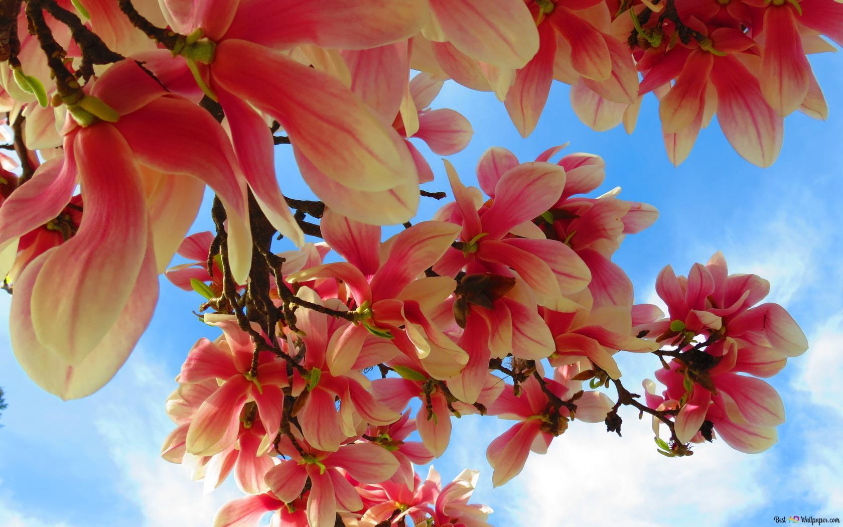 Fond De Printemps Fleurs Roses Hd Fond D Ecran Telecharger