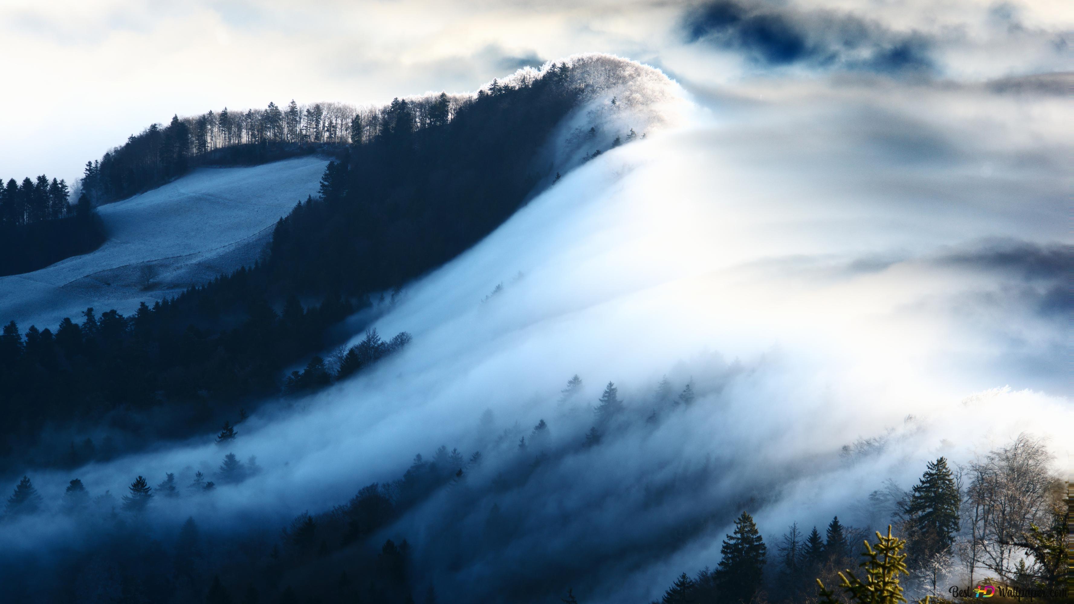 Foresta Nebbiosa E Le Montagne Download Di Sfondi Hd