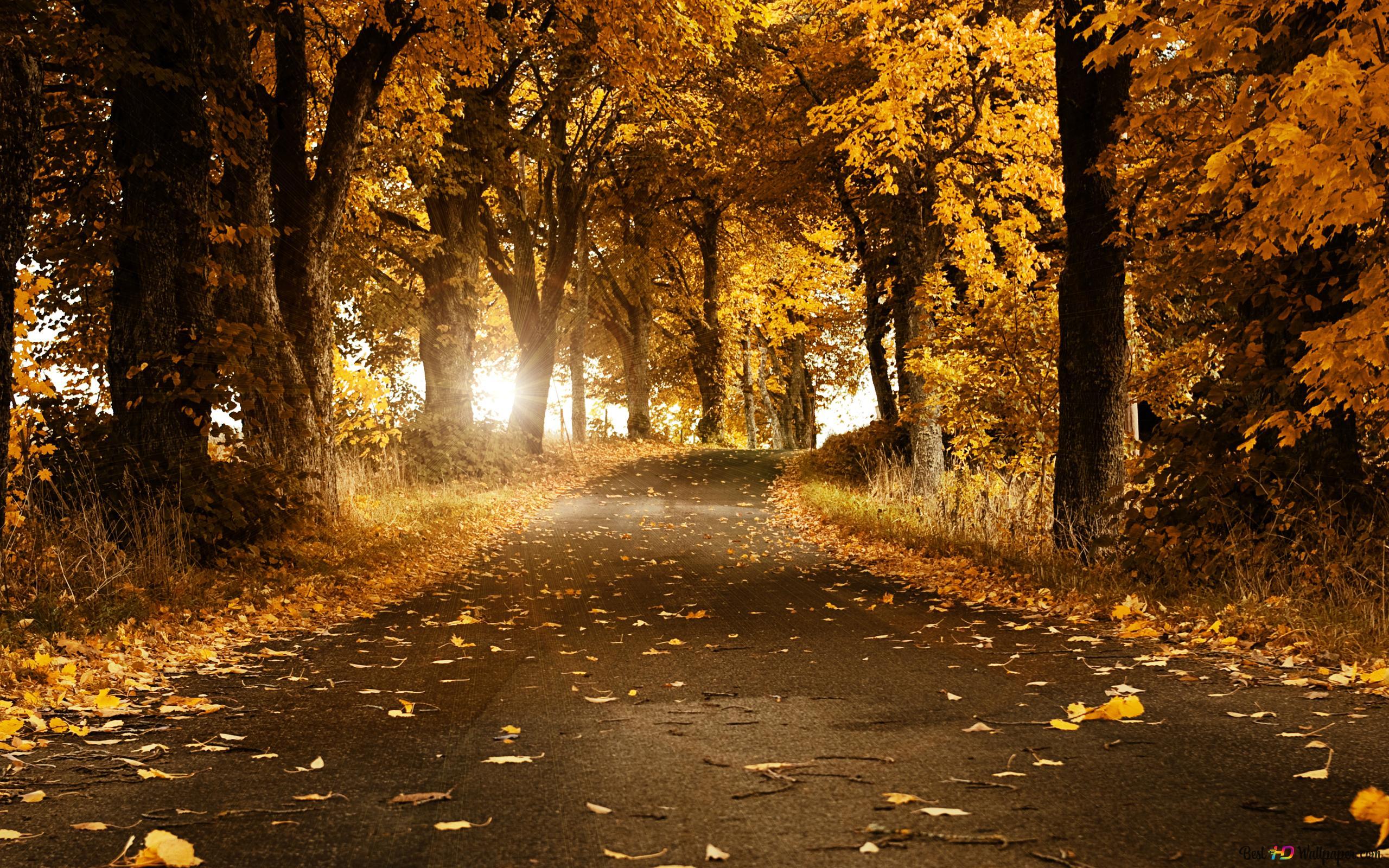 foto de forêt d'automne et les feuilles jaunes HD fond d'écran télécharger
