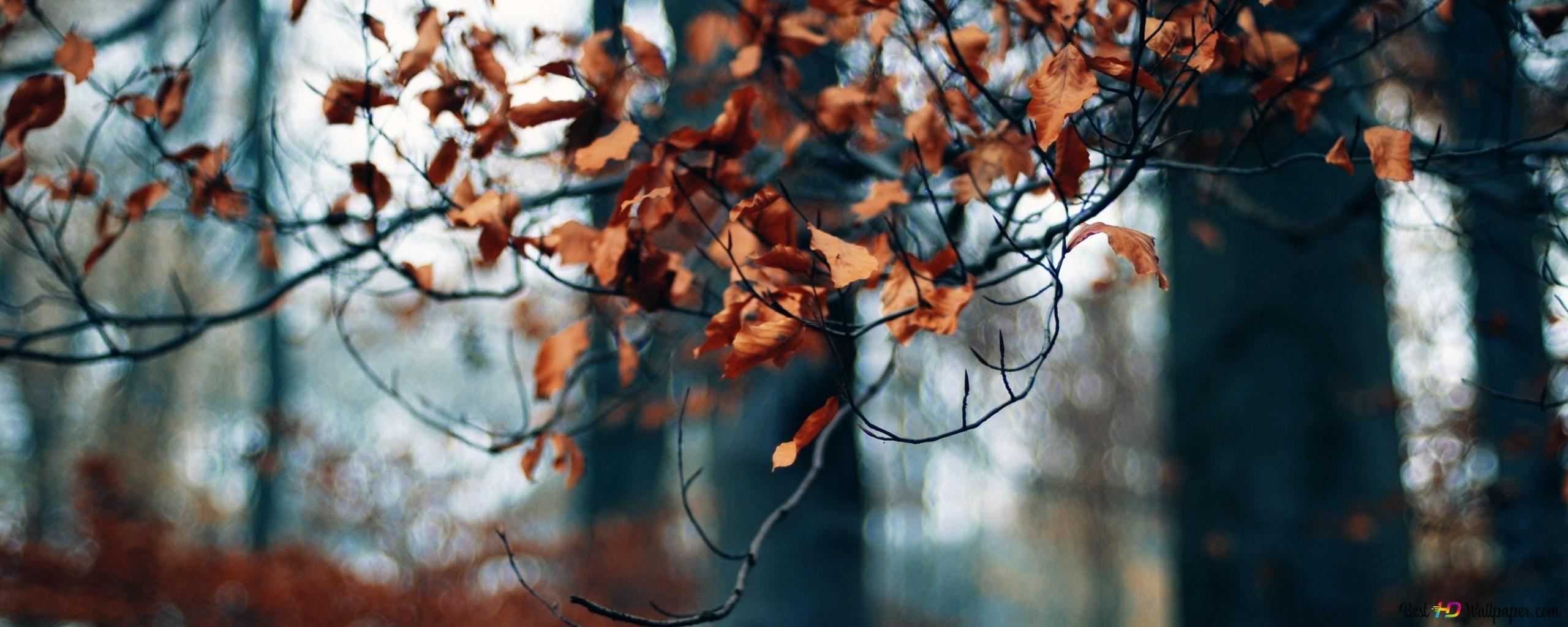foto de Forêt - feuilles d'automne HD fond d'écran télécharger