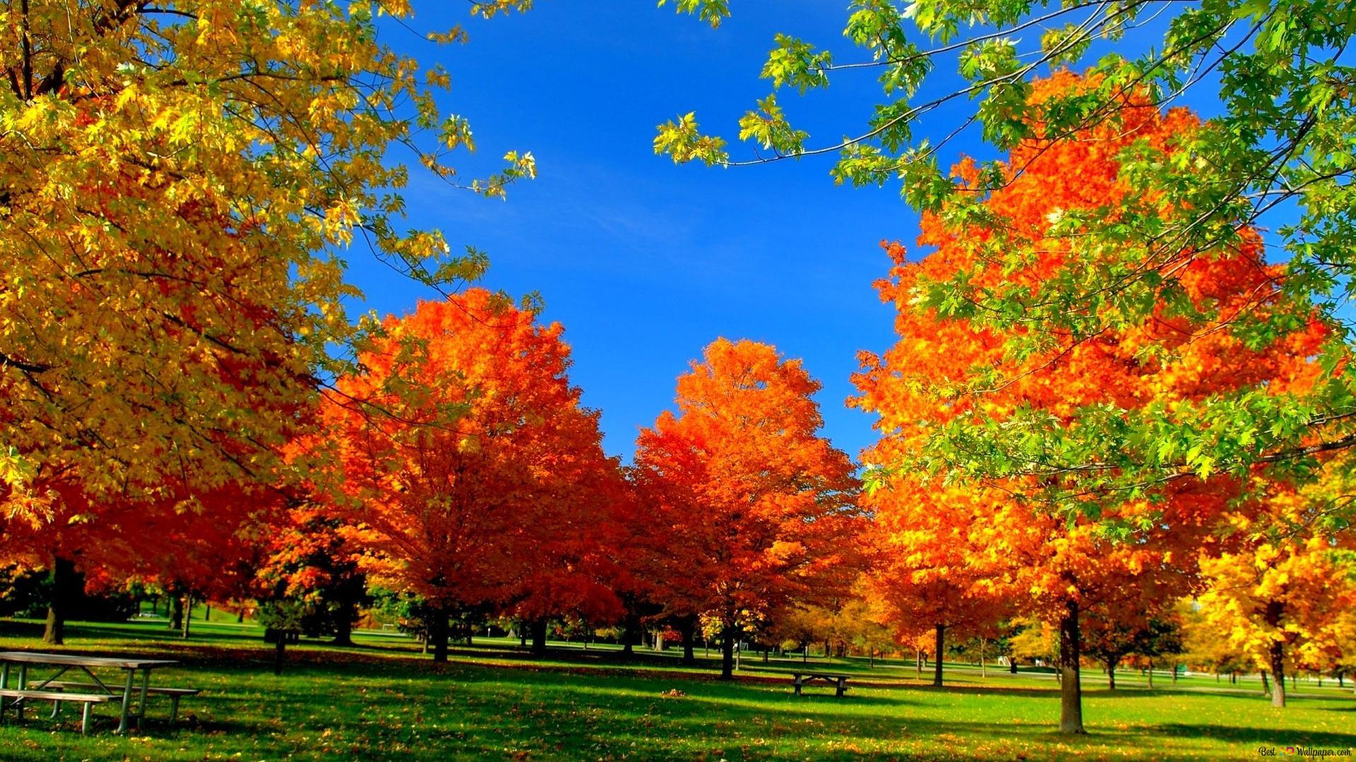 公園で秋の木 Hd壁紙のダウンロード