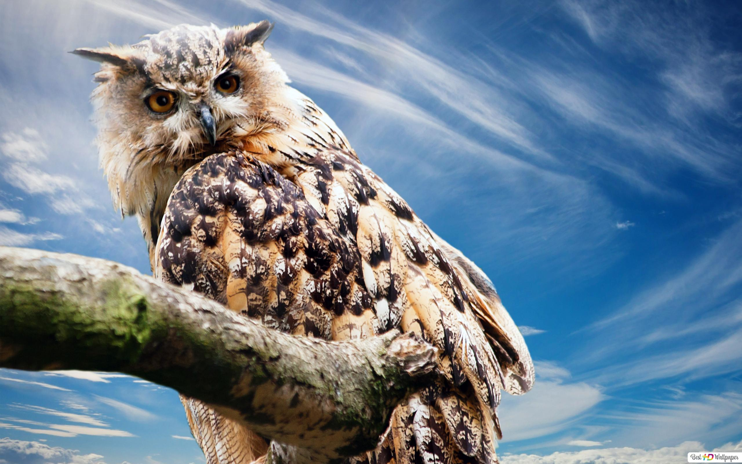 great horned owl wallpaper 2560x1600 1499 7