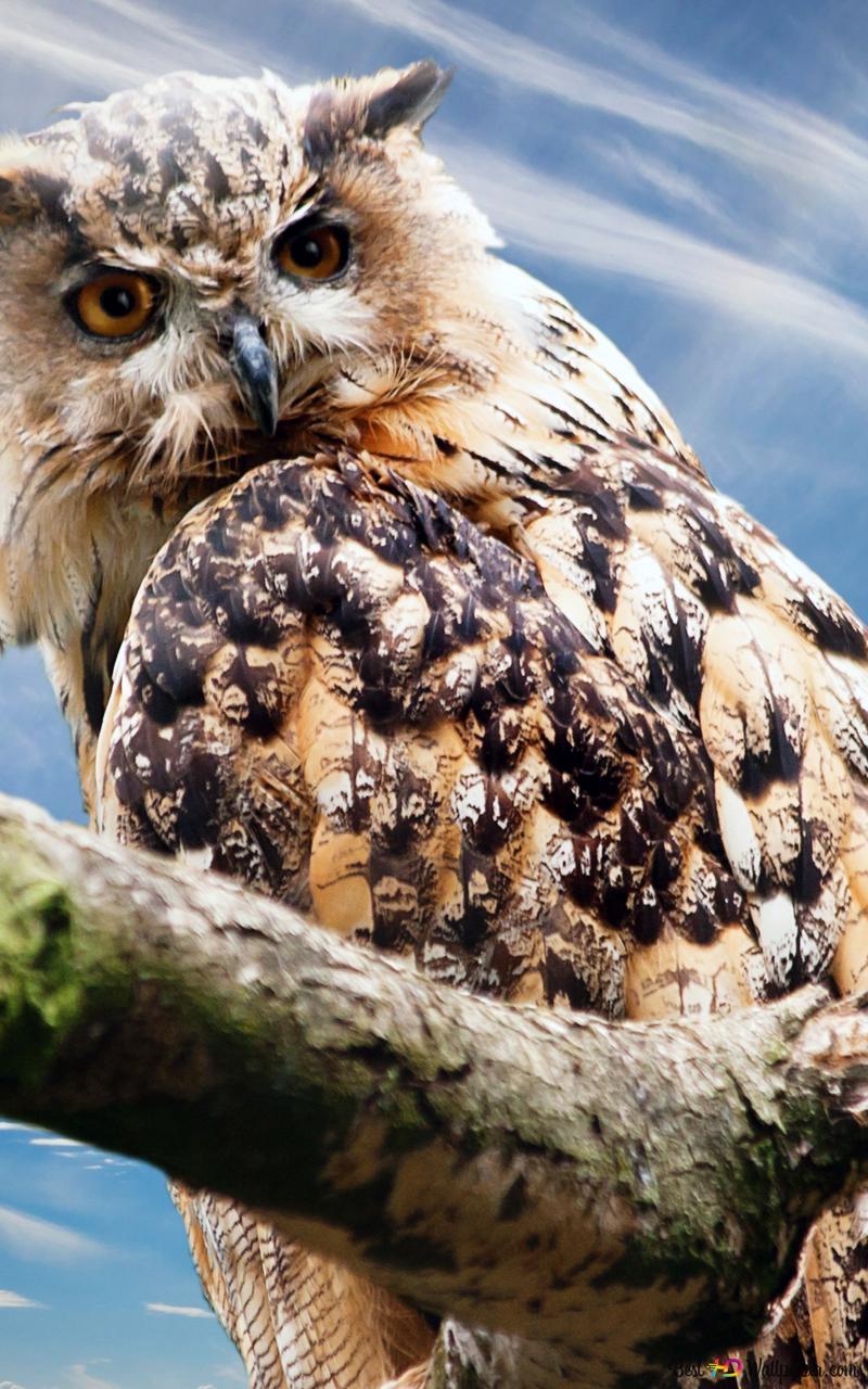 great horned owl hd wallpaper download