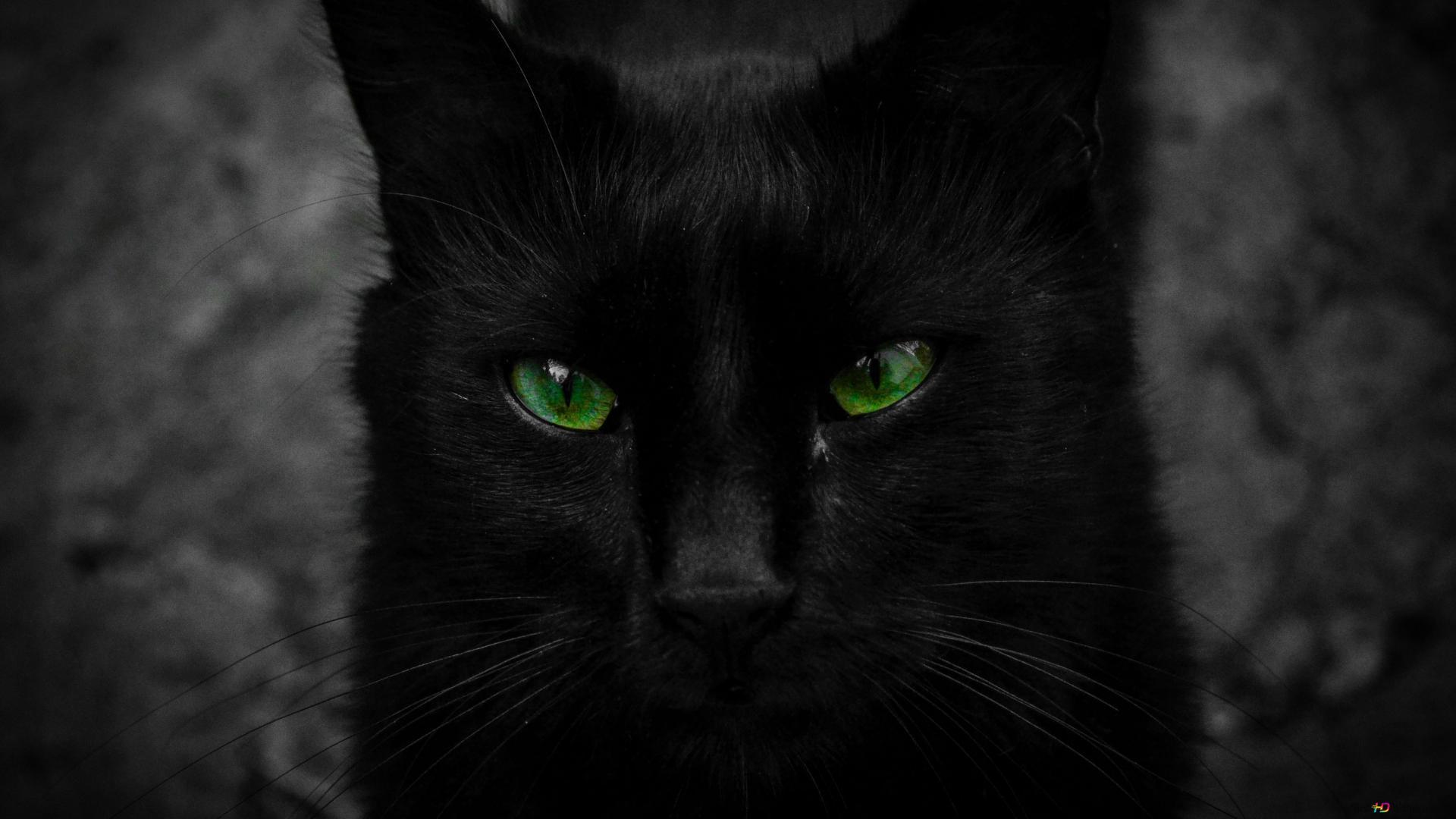 Green Eyed Black Cat Hd Wallpaper Download