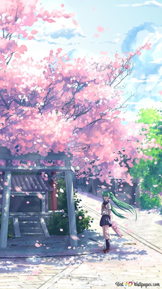 Hatsune Miku Under The Sakura Blossom Tree Hd Wallpaper