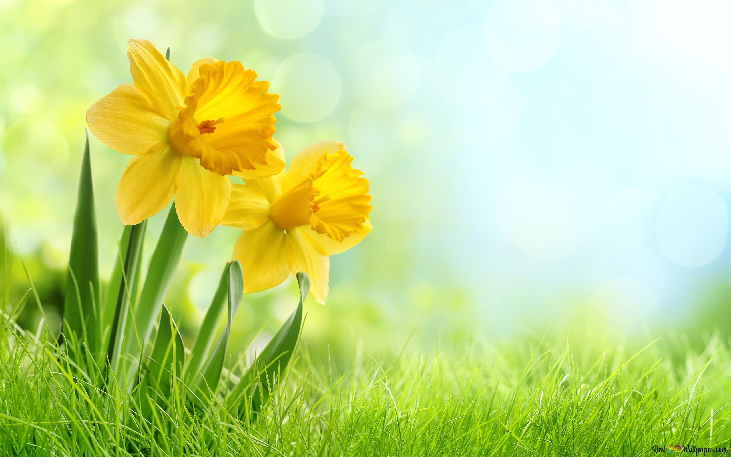 黄色の花 Hd壁紙のダウンロード