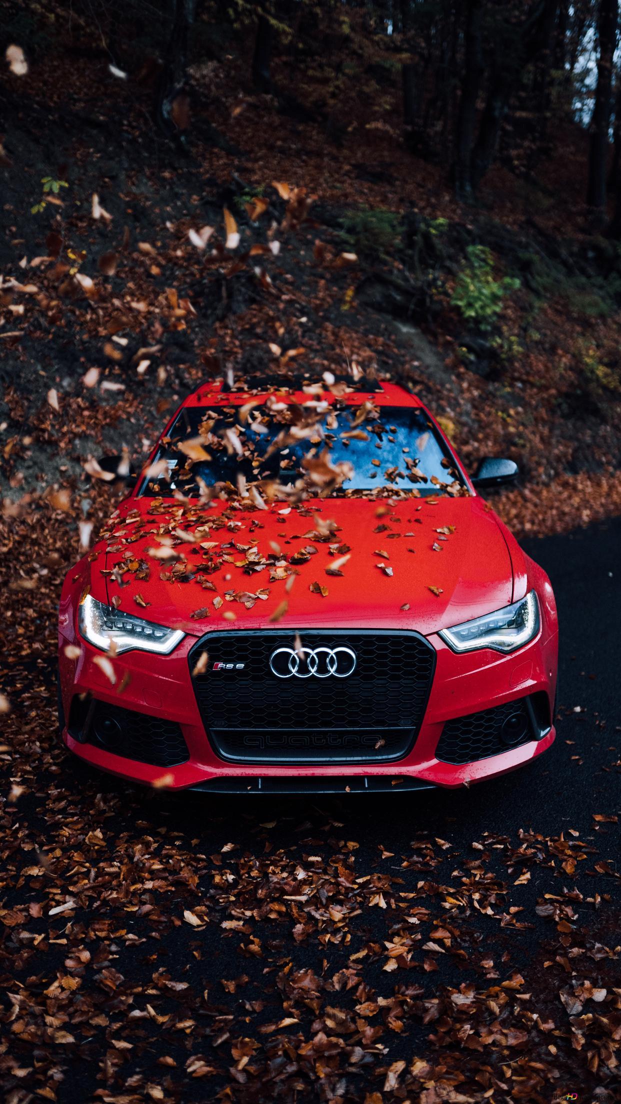 フード上記乾燥した葉の赤いアウディ車 Hd壁紙のダウンロード