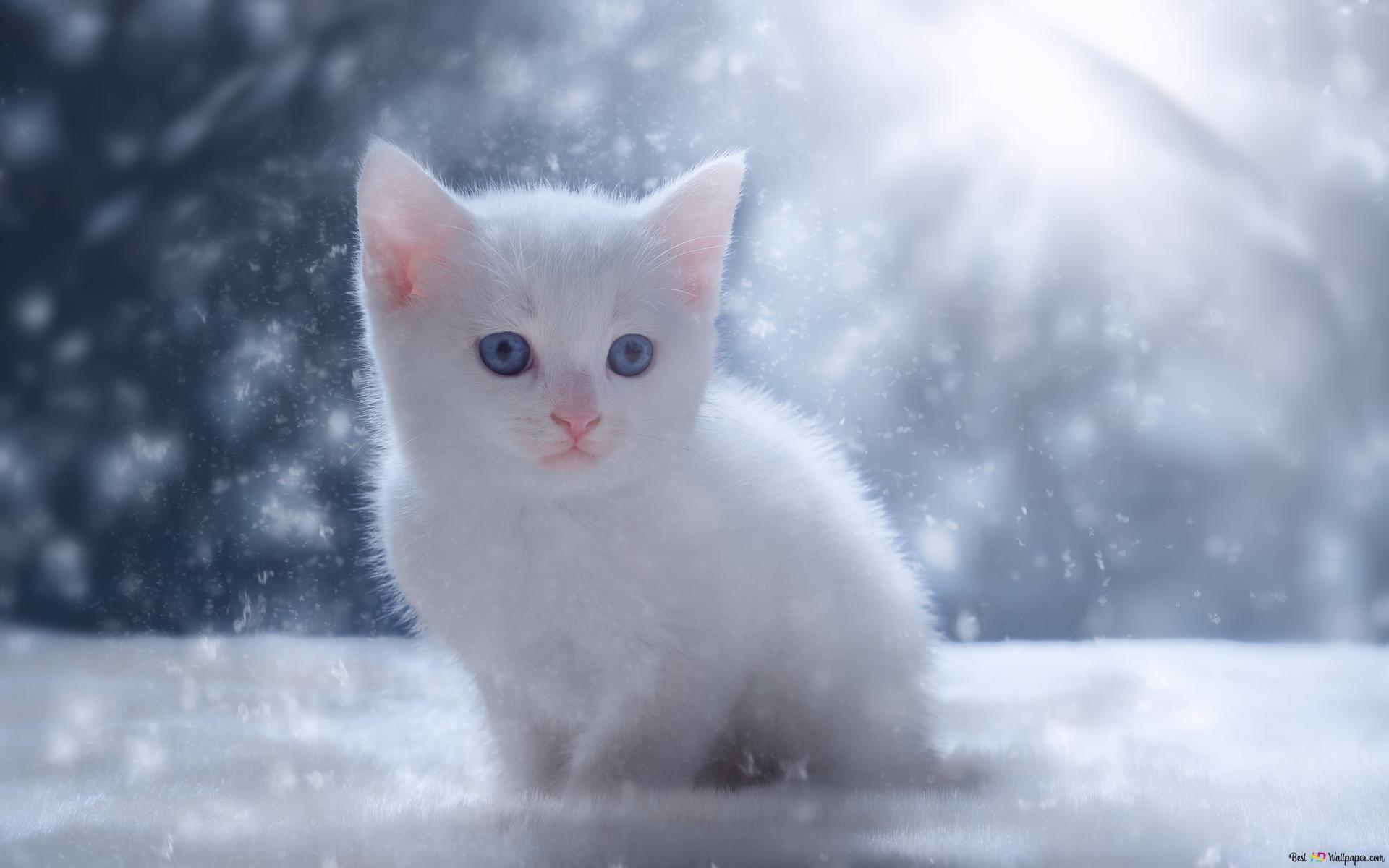 降雪中の猫 Hd壁紙のダウンロード