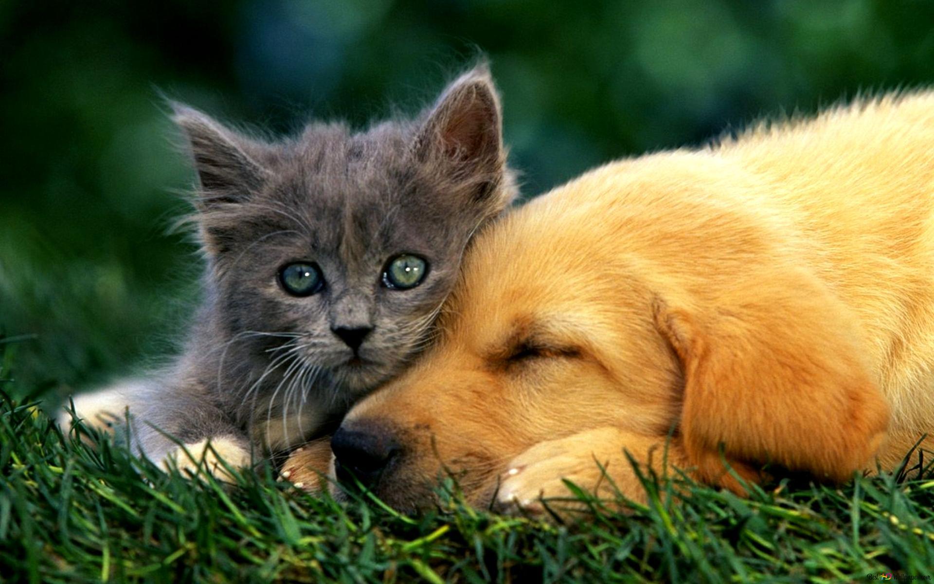 Animals Praying kitten Kitten Cat HD wnload Desktop