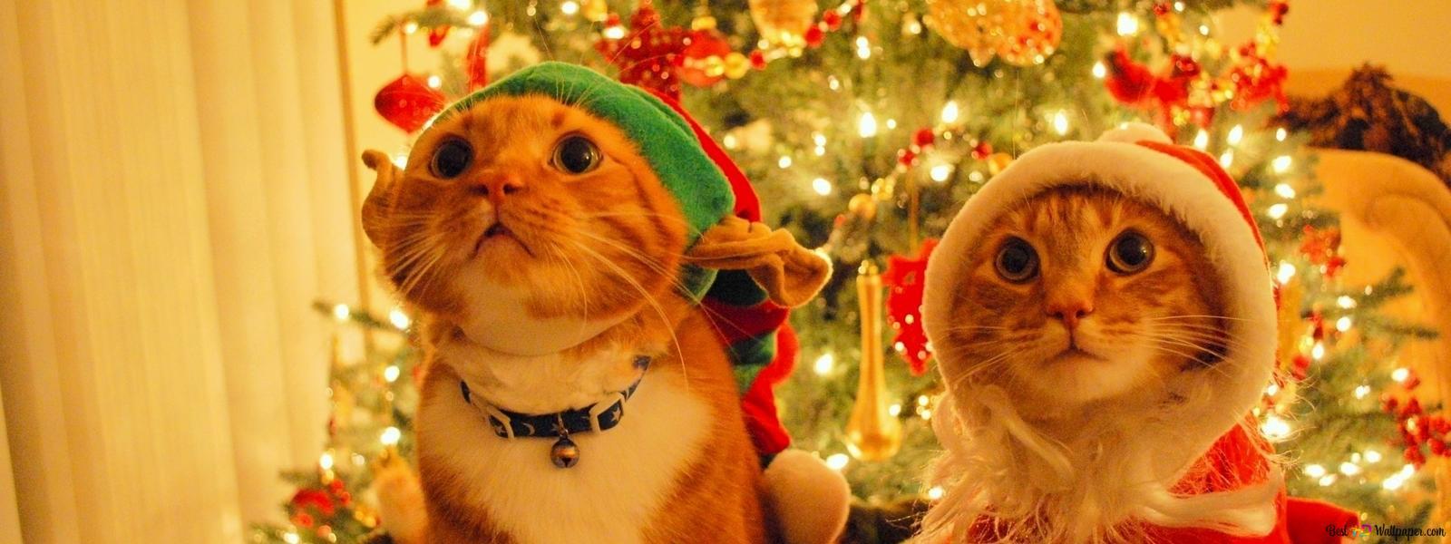 クリスマス休暇でかわいい猫 Hd壁紙のダウンロード