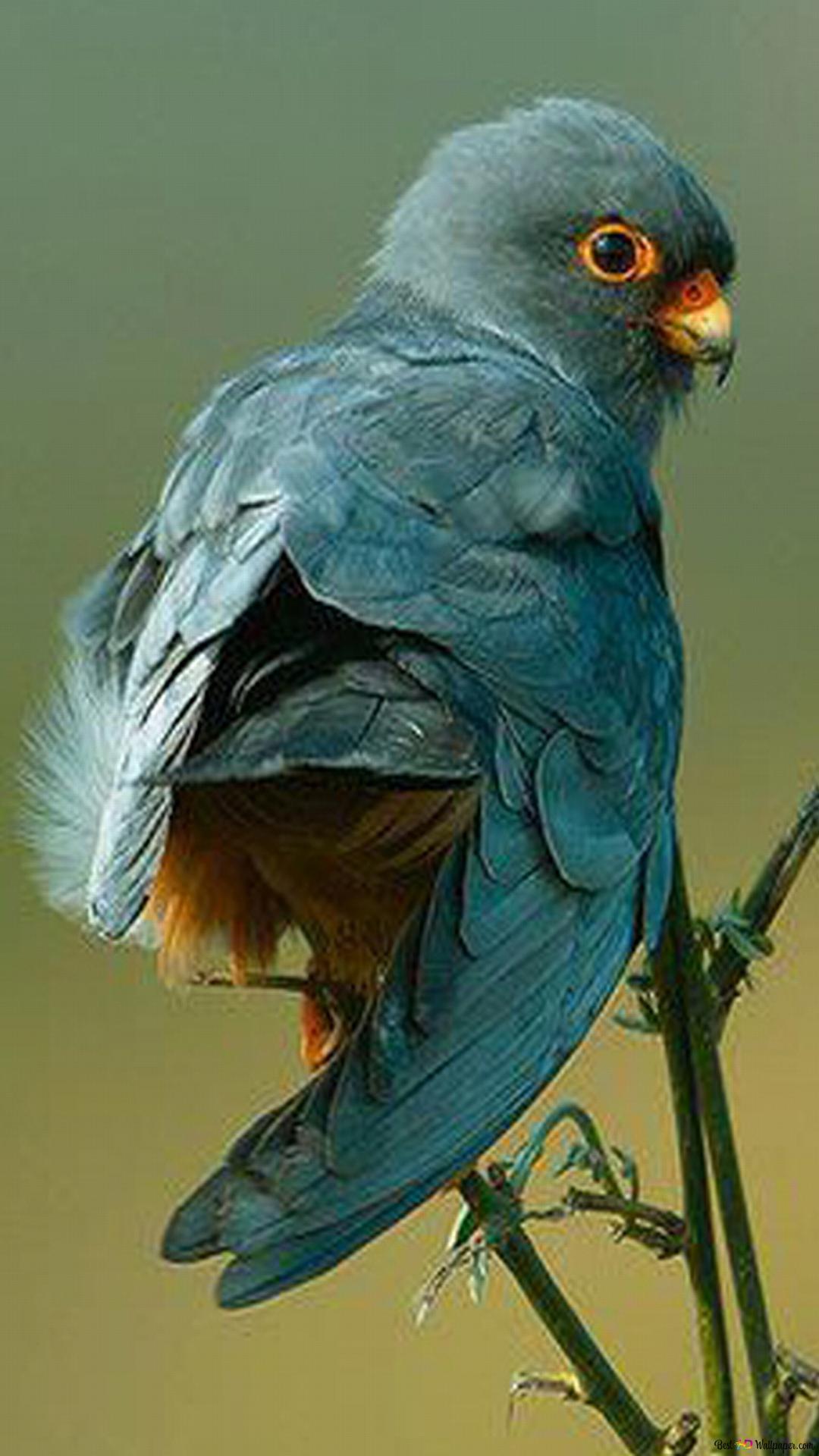 L Amour Des Oiseaux Hd Fond D Ecran Telecharger