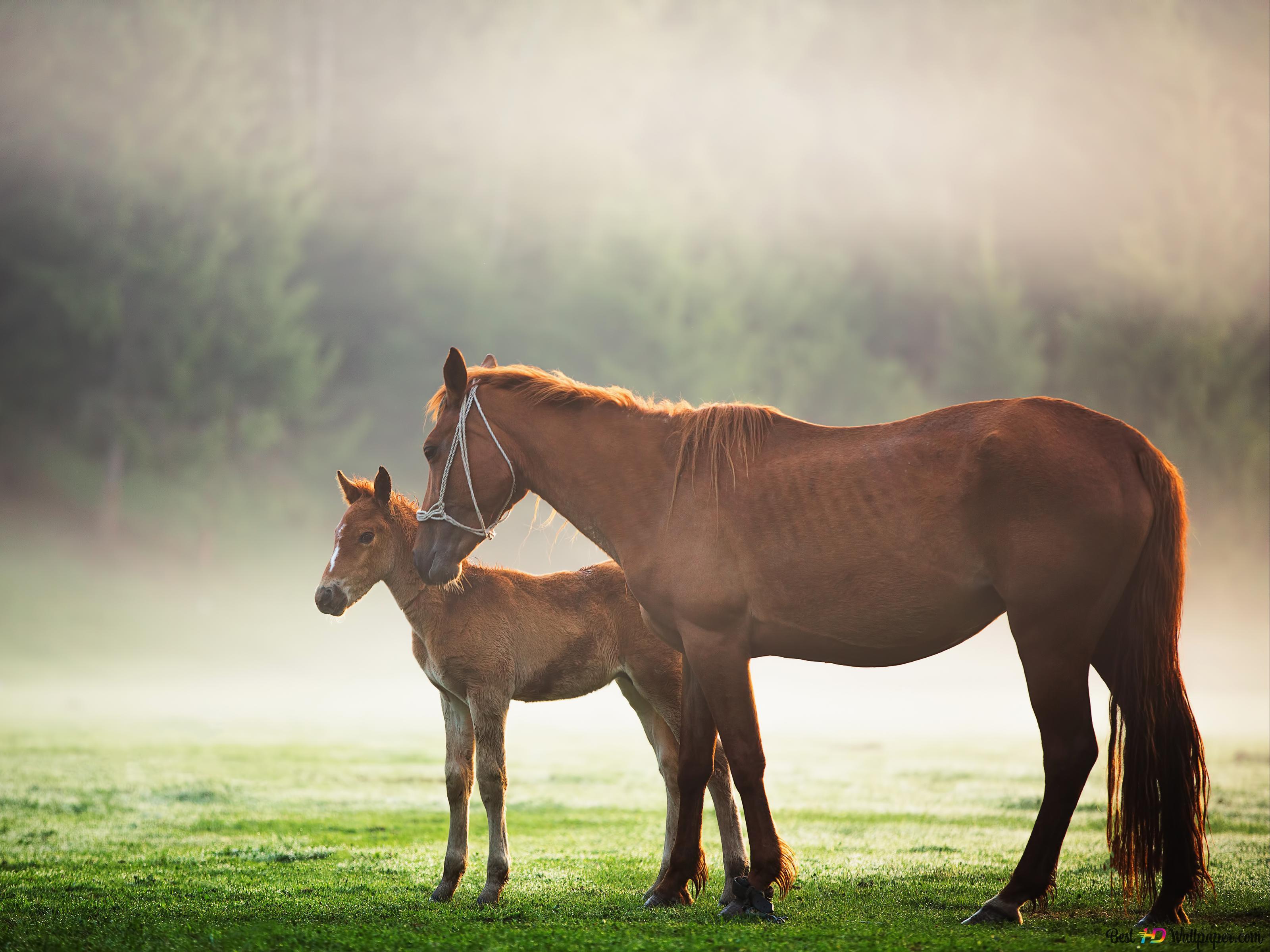 Скачать с сайта фоны - Мустанг , лошадь , арт | 2400x3200
