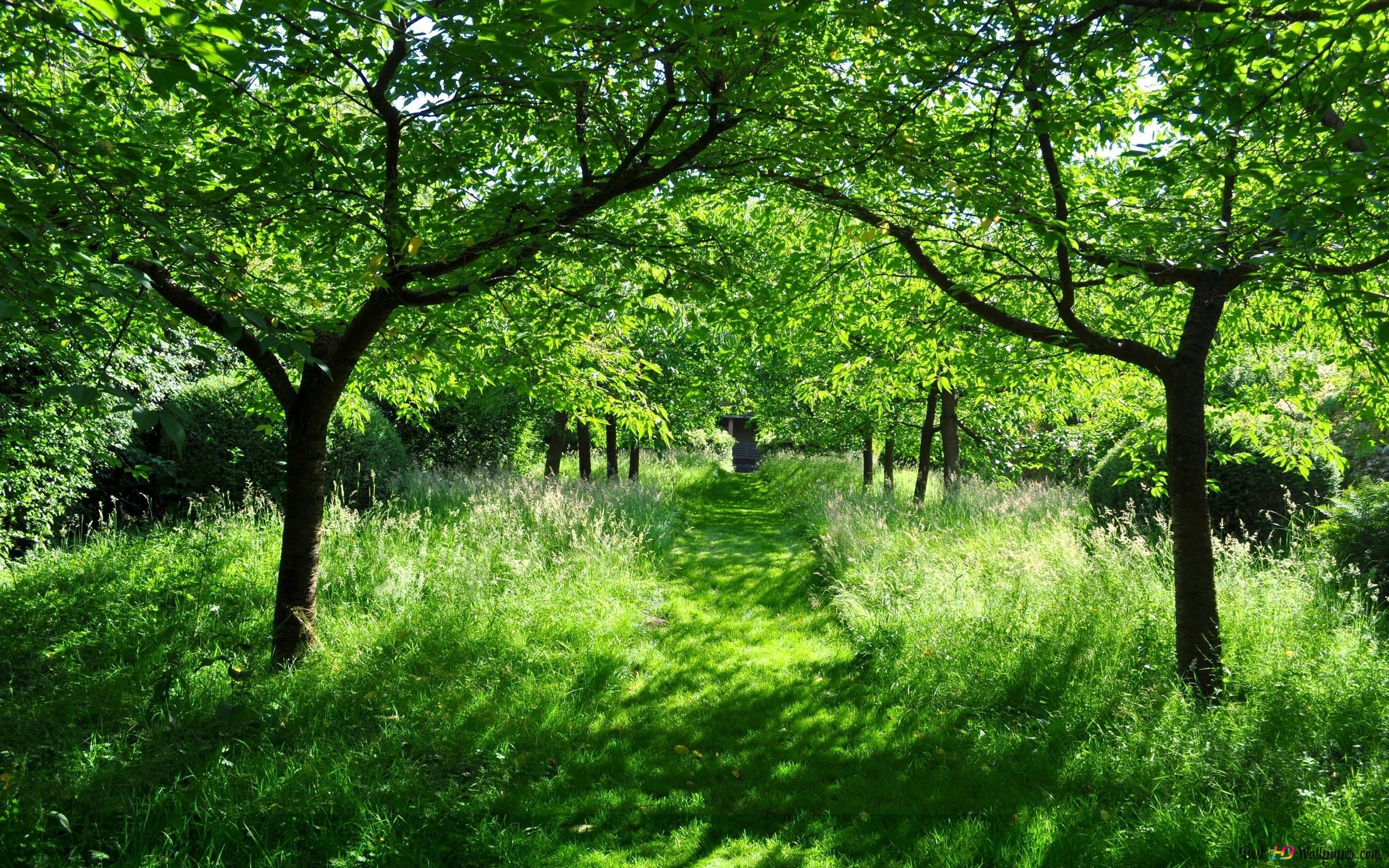 緑の森の道 Hd壁紙のダウンロード