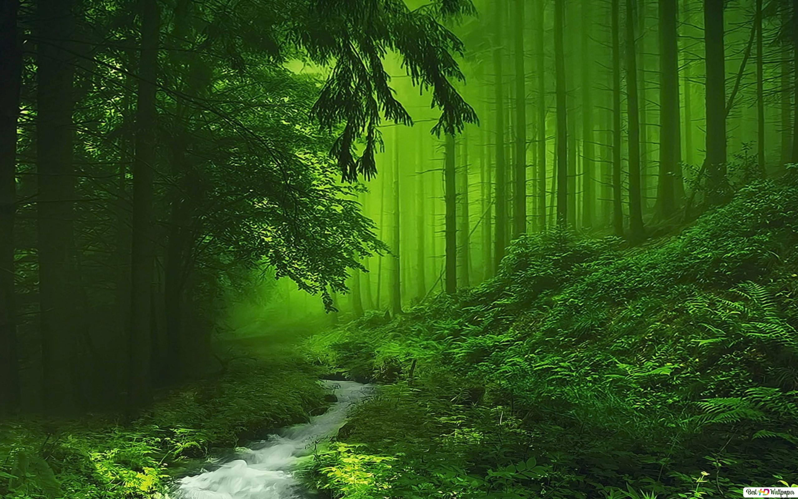 緑の霧の森 Hd壁紙のダウンロード