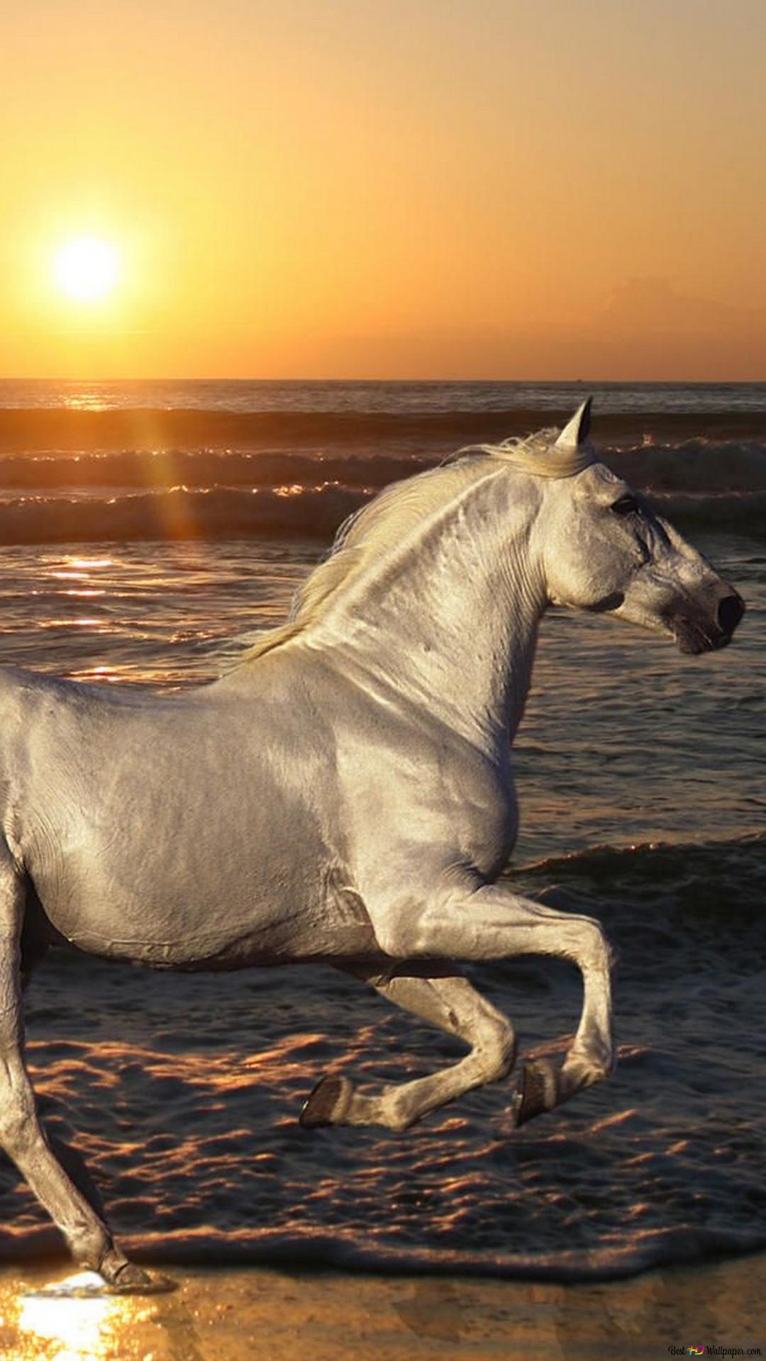 馬在海灘上運行高清壁紙下載