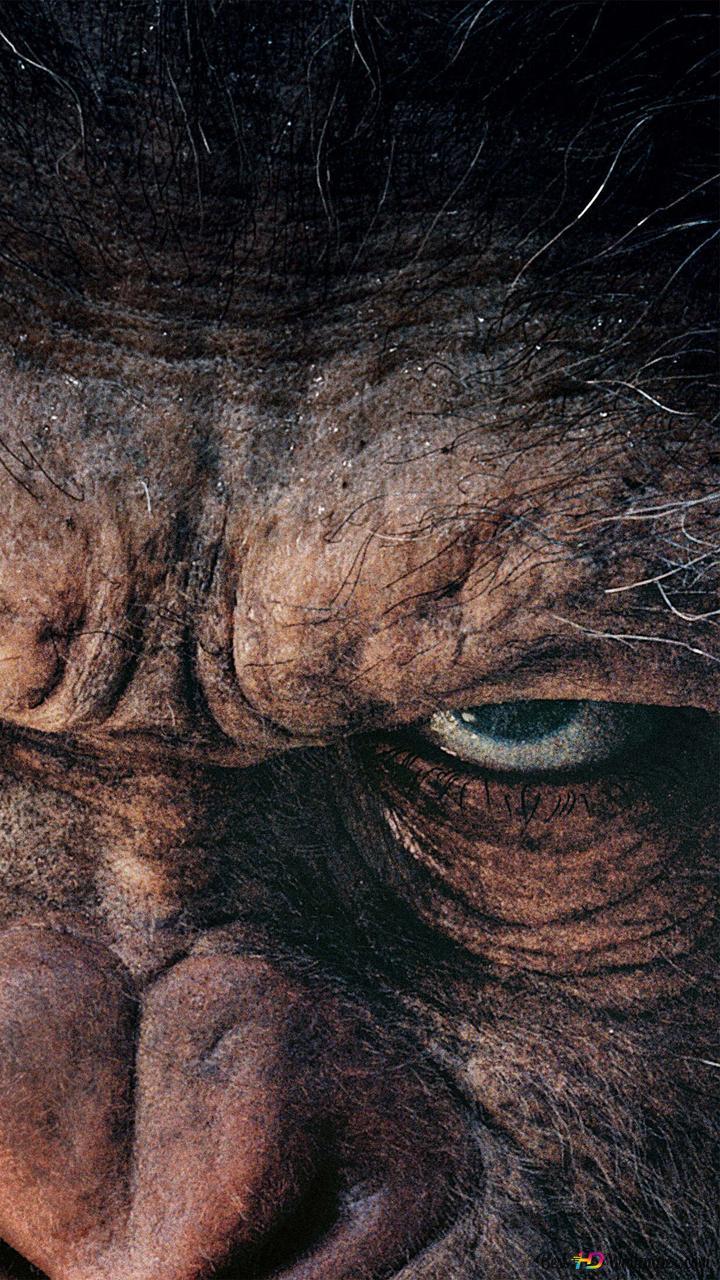 Maymunlar Cehennemi Savaş Hd Duvar Kağıdı Indir