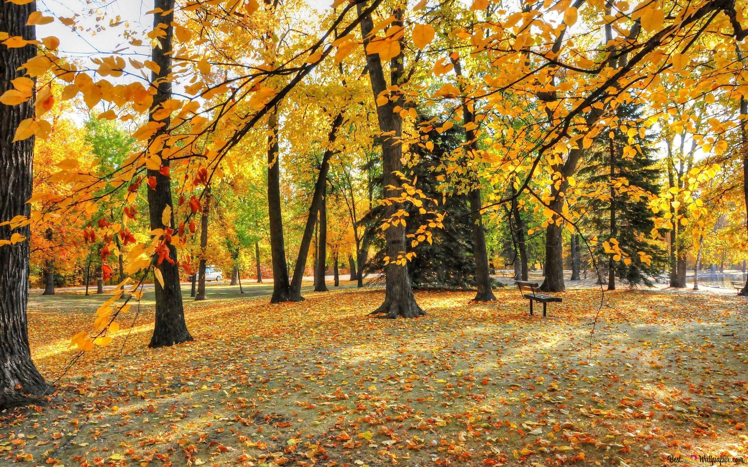 美しい秋の風景 Hd壁紙のダウンロード
