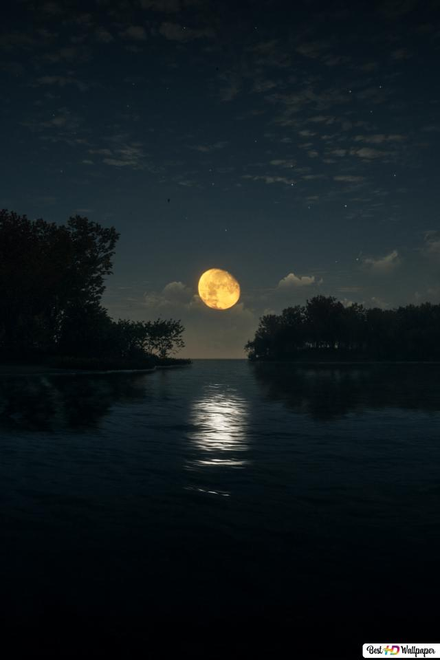 Moonlight 2016, Call of The Wild HD wallpaper download