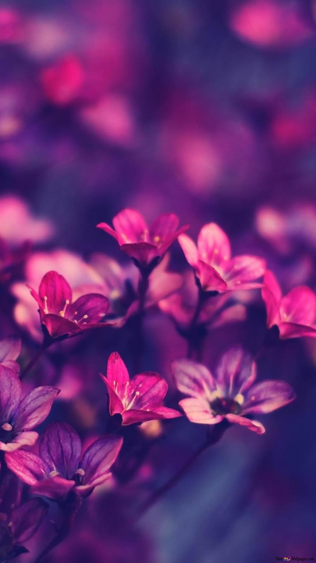 Natur Lila Blumen Hintergrund Hd Hintergrundbilder Herunterladen