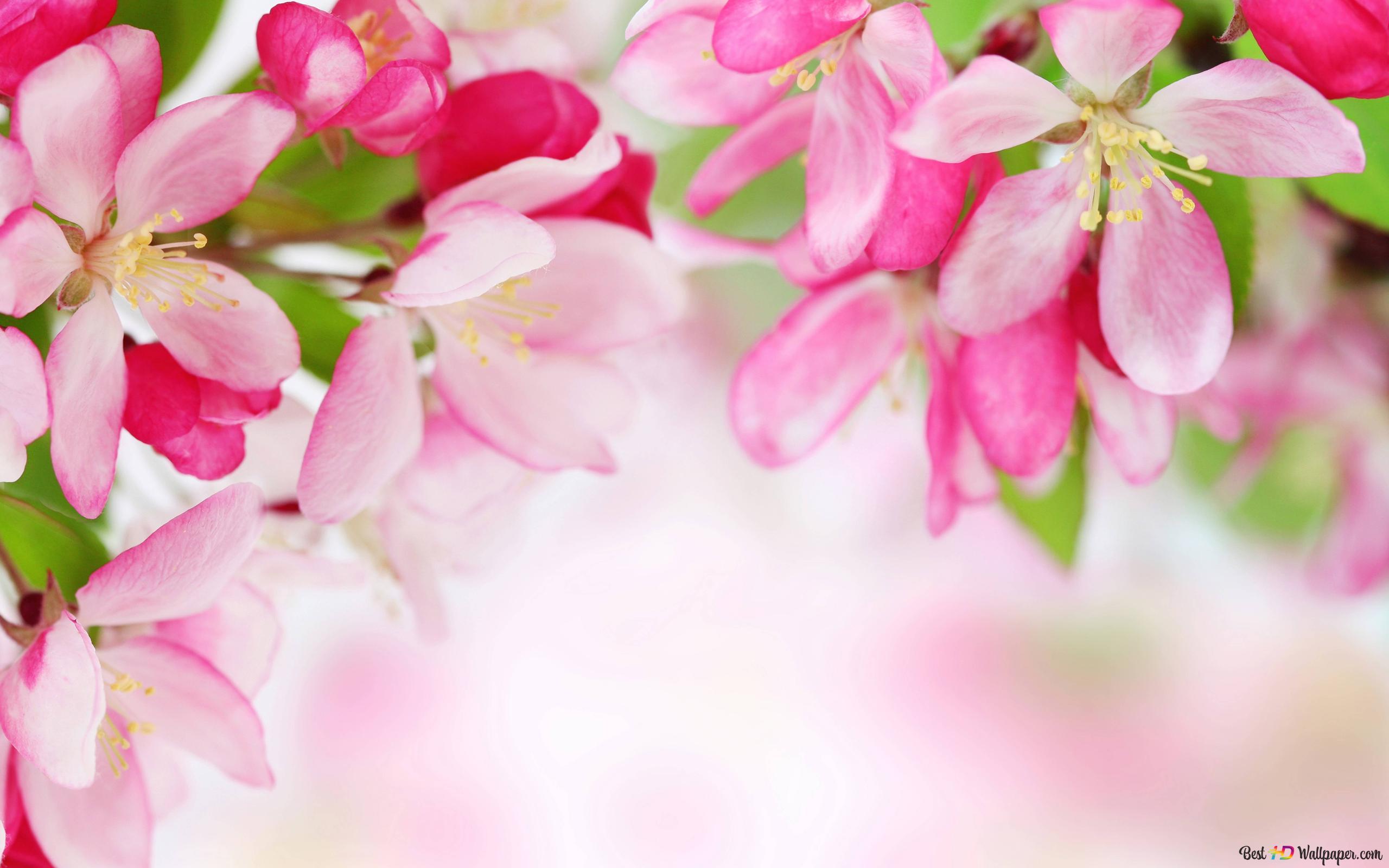 Descargar Fondo De Pantalla Naturaleza Flores De Color Rosa De