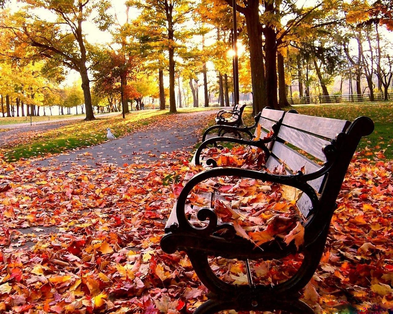foto de Nature - automne, chute HD fond d'écran télécharger
