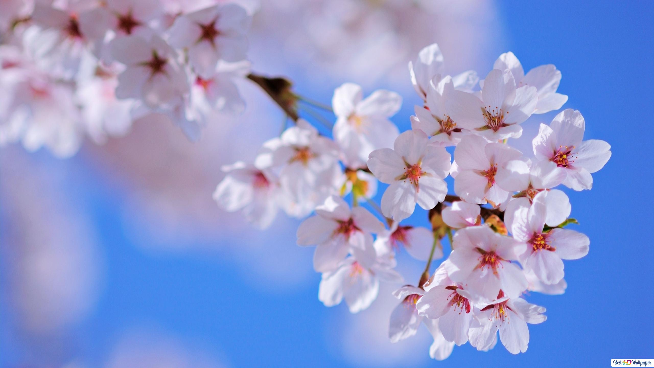 Nature Fleur Blanche Hd Fond D Ecran Telecharger