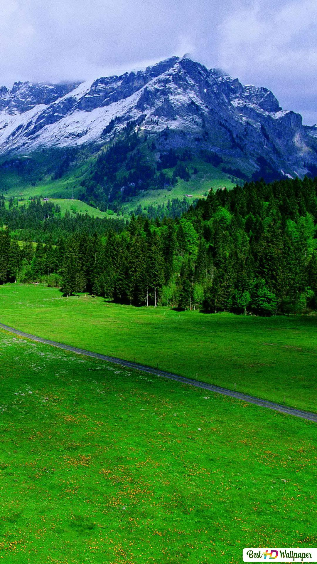 Nature Greenery Background Hd Wallpaper Download