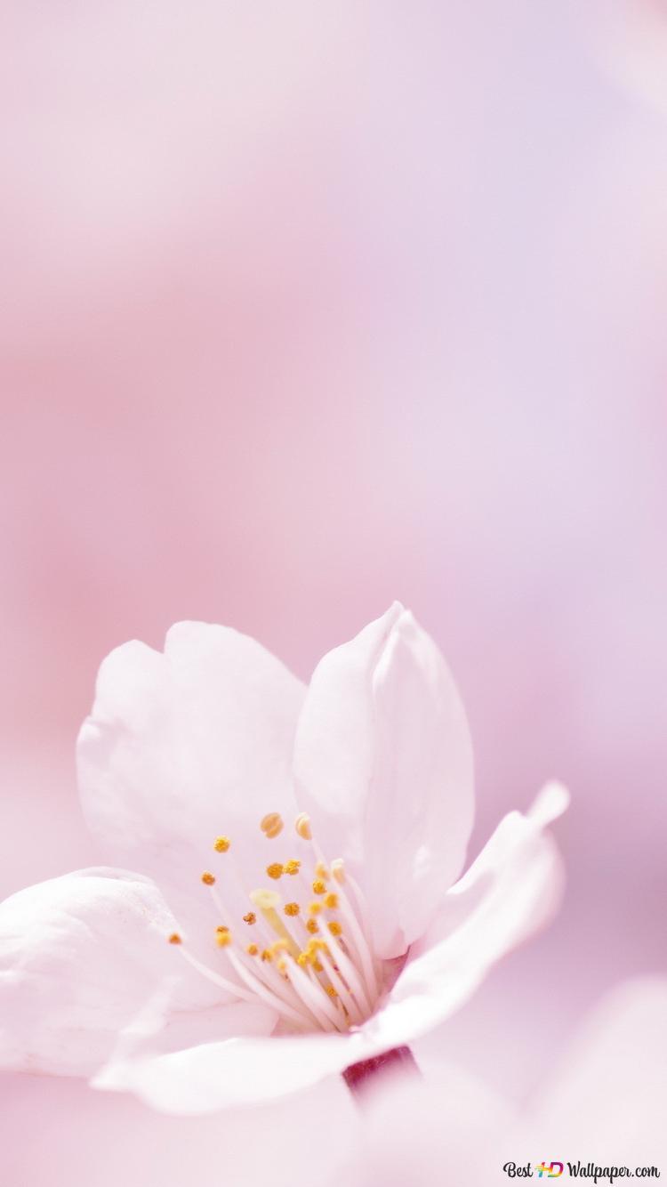 Nature Primavera Sfondo Rosa Download Di Sfondi Hd