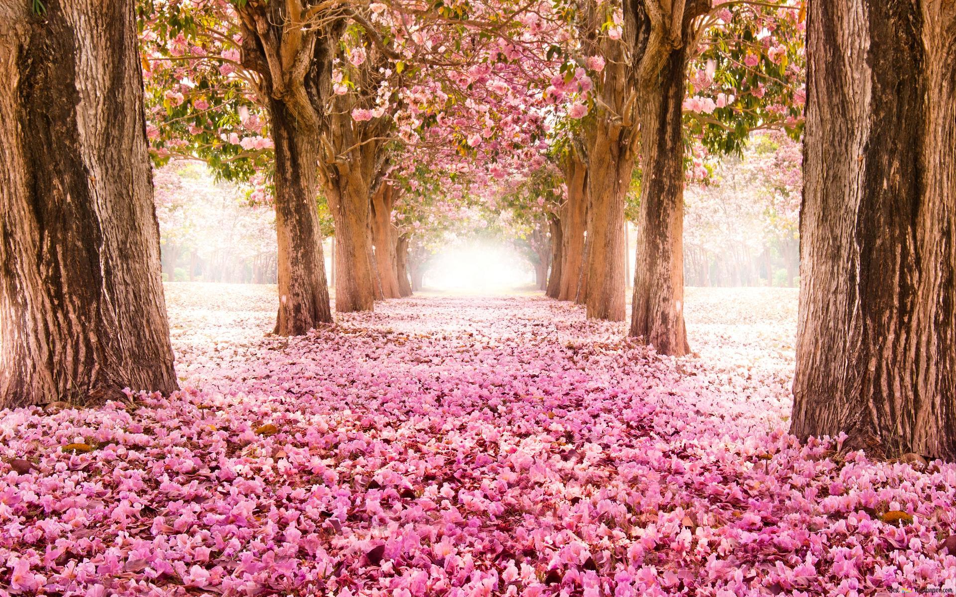 Nature Tree Flower Way Hd Wallpaper Download