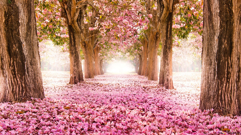 Get Tree Hd Wallpaper Download JPG