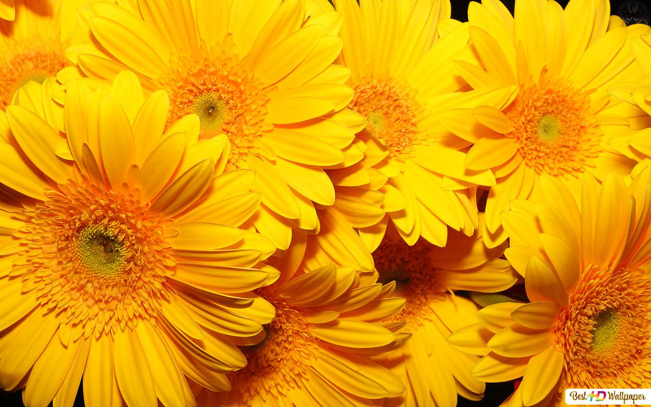 Nature Yellow Flowers Hd Wallpaper Download