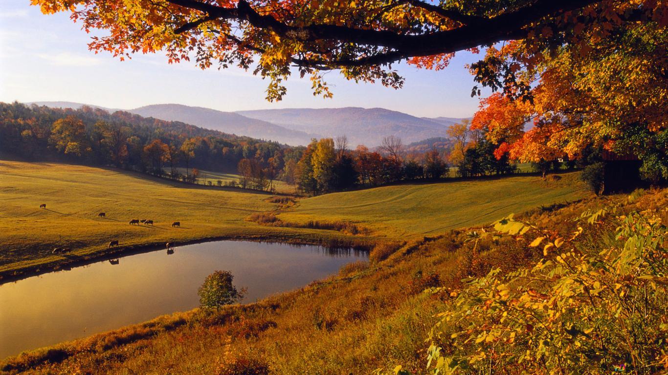 Natureza Vista Paisagem Verde Hd Wallpaper Download