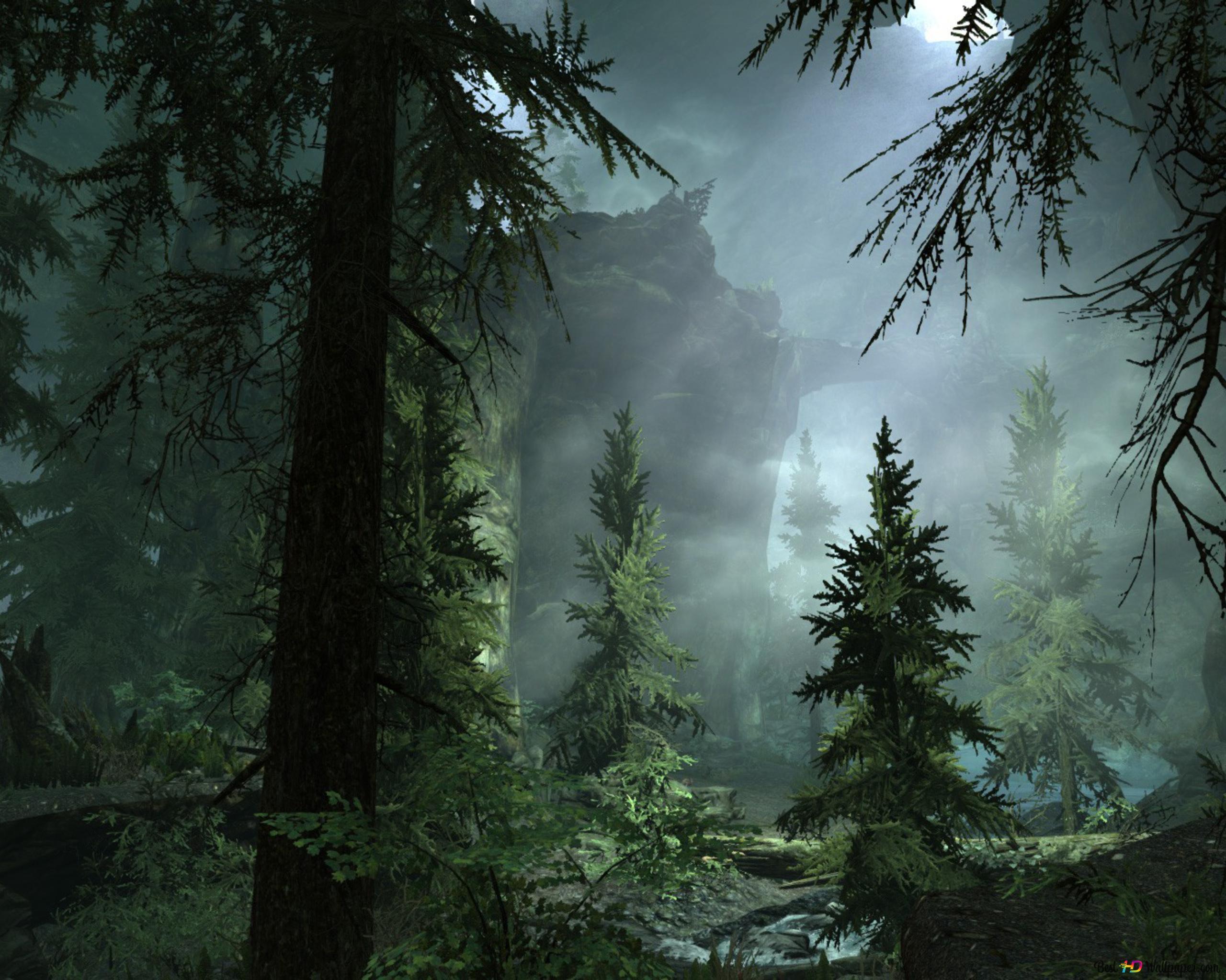 Neblige Nacht In Wald Hd Hintergrundbilder Herunterladen