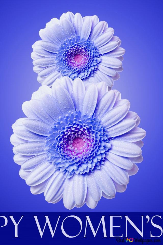 女性の日 ガーベラの花 Hd壁紙のダウンロード