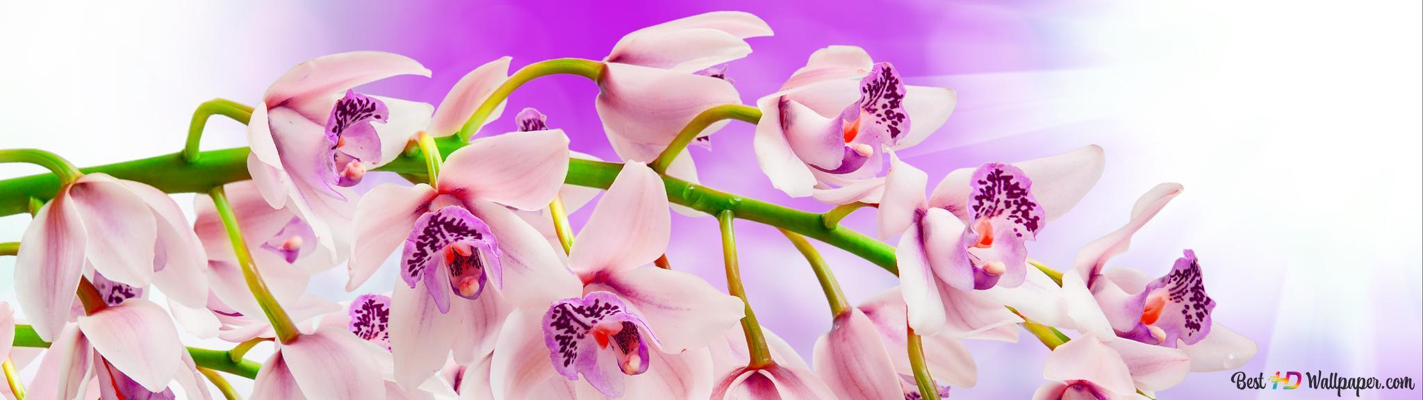 foto de orchidées de printemps sur la branche HD fond d'écran télécharger