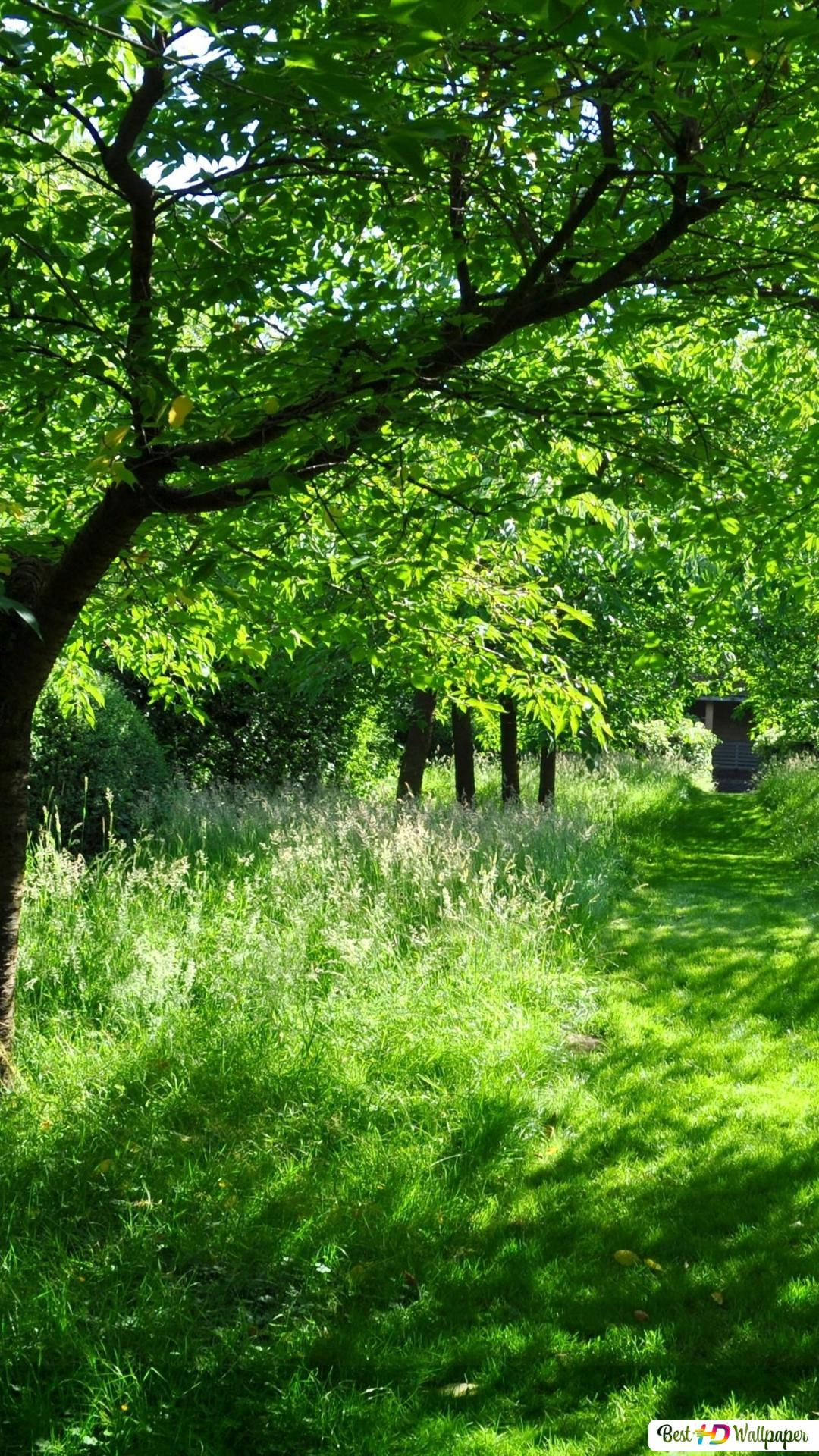 Path In The Green Forest Hd Wallpaper Download