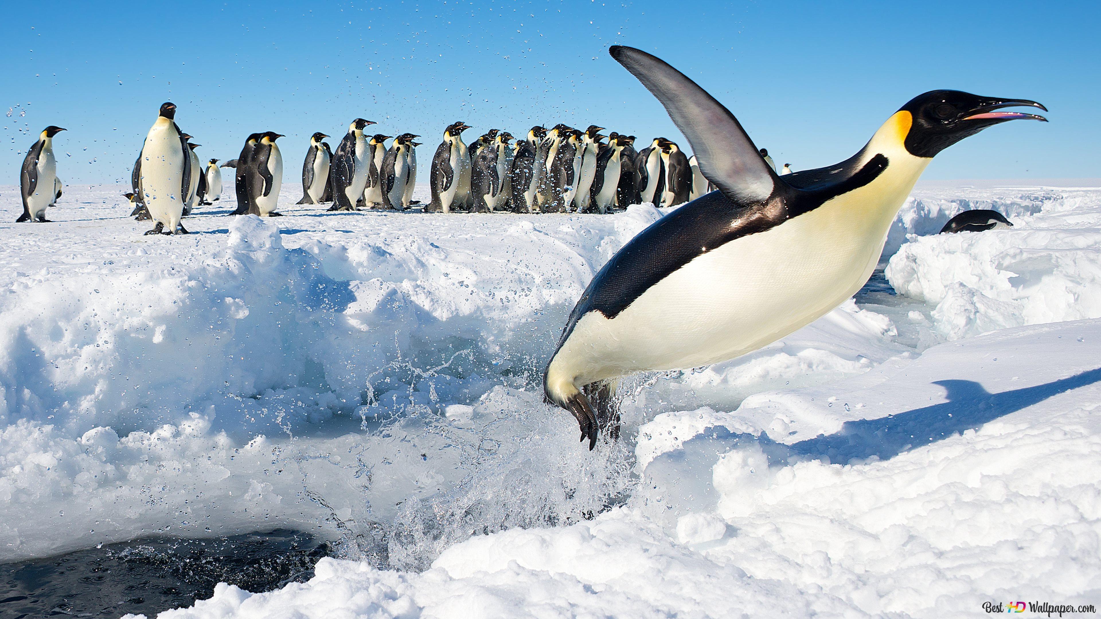 ペンギンは 私を待って Hd壁紙のダウンロード