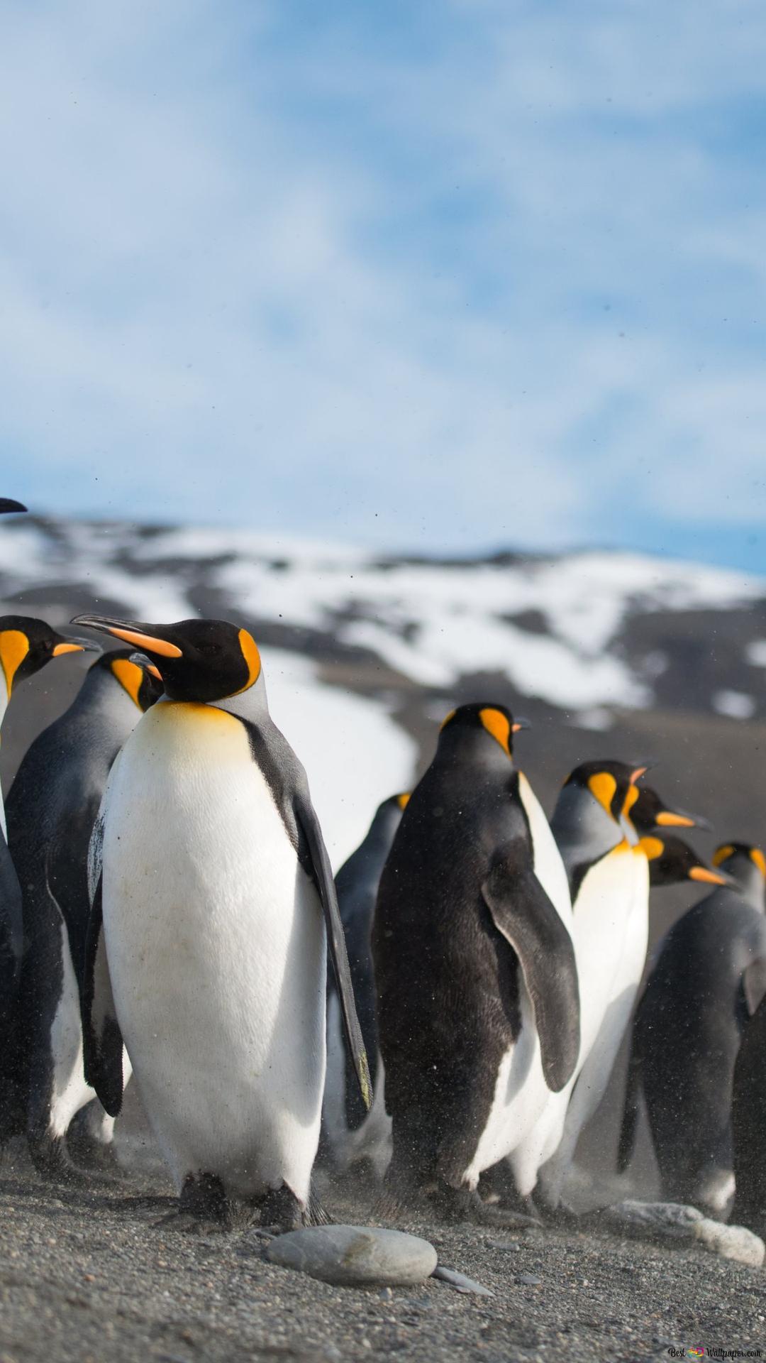 ペンギンの行進 Hd壁紙のダウンロード