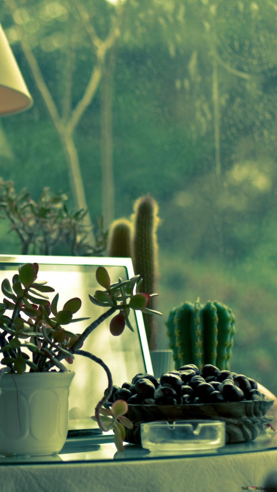 Piante Di Cactus Download Di Sfondi Hd