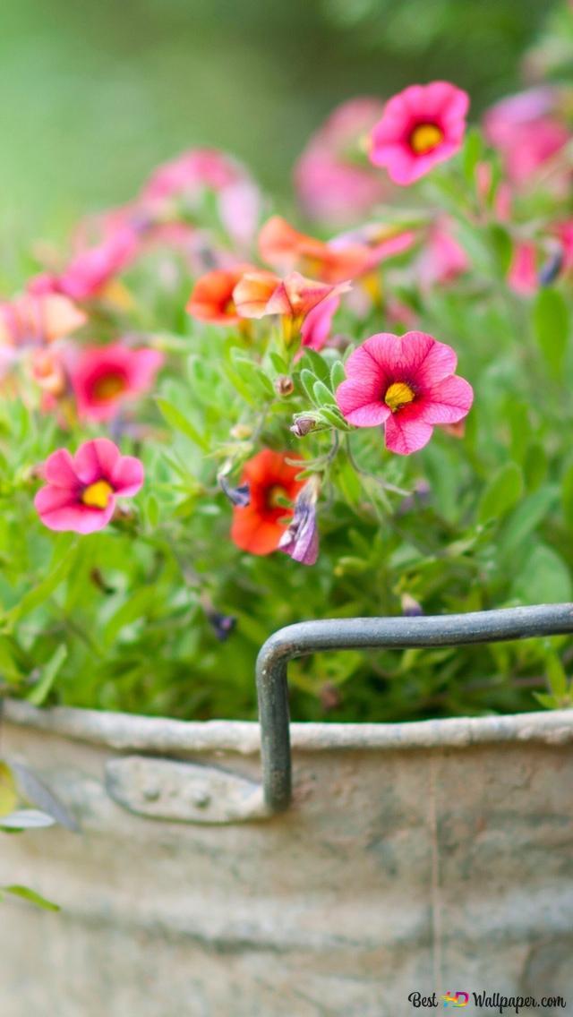 Pink Spring Flowers Hd Wallpaper Download