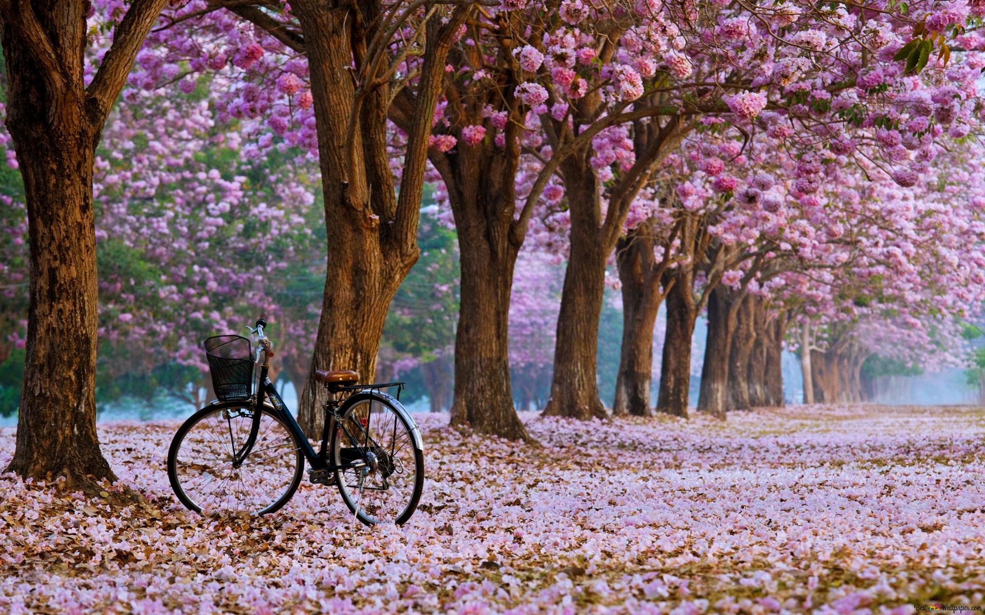 Slike za desktop proljeće