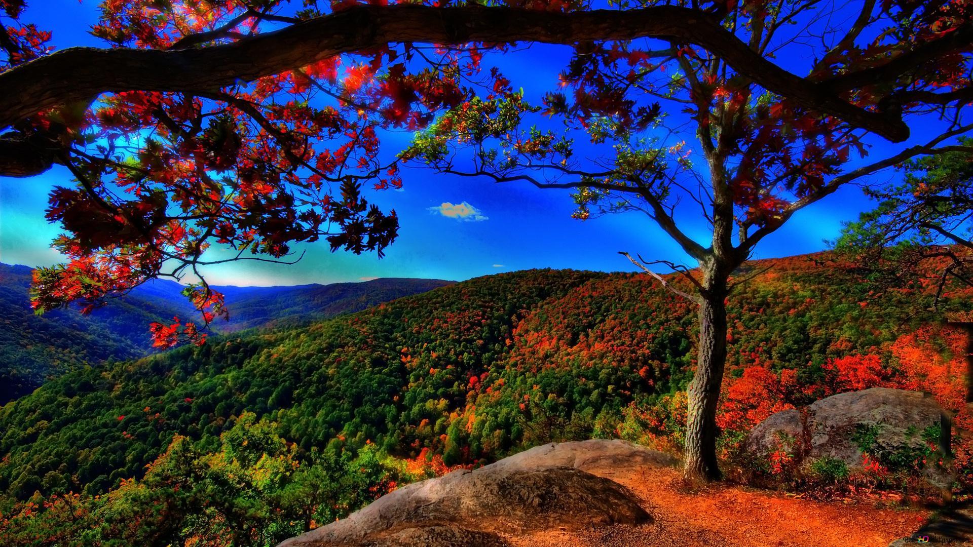 秋の風景 Hd壁紙のダウンロード
