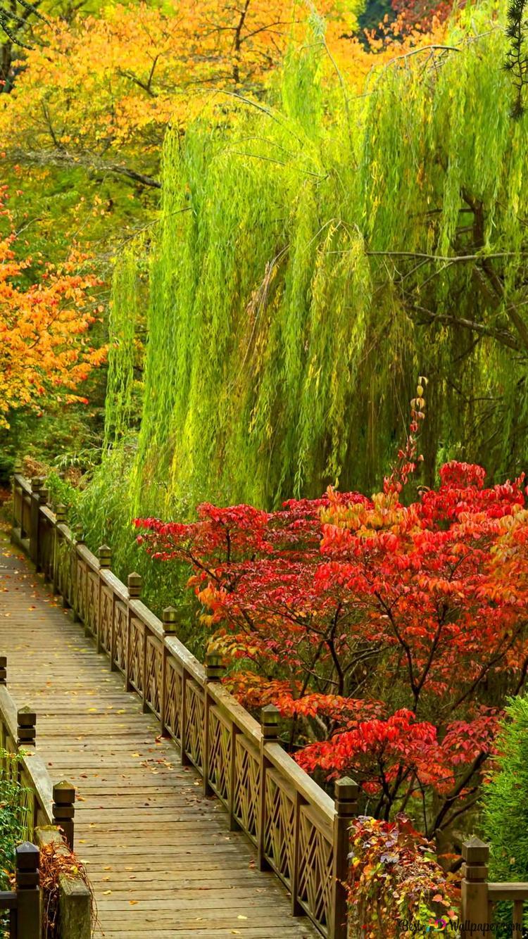 秋の公園で橋 Hd壁紙のダウンロード