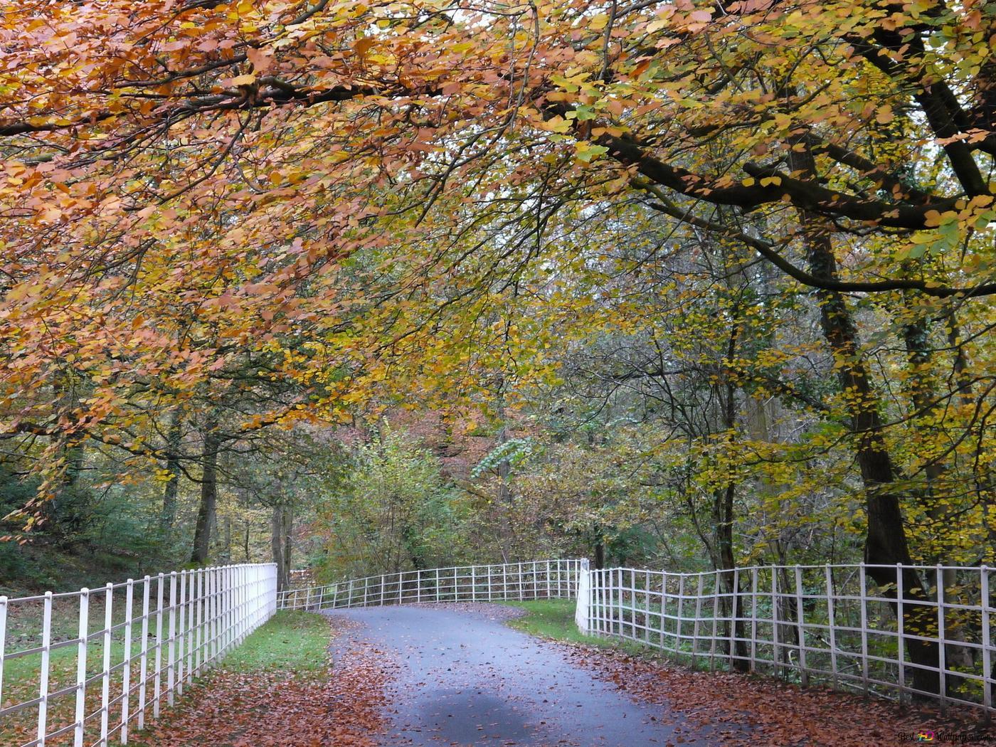 秋の美しい景色 Hd壁紙のダウンロード