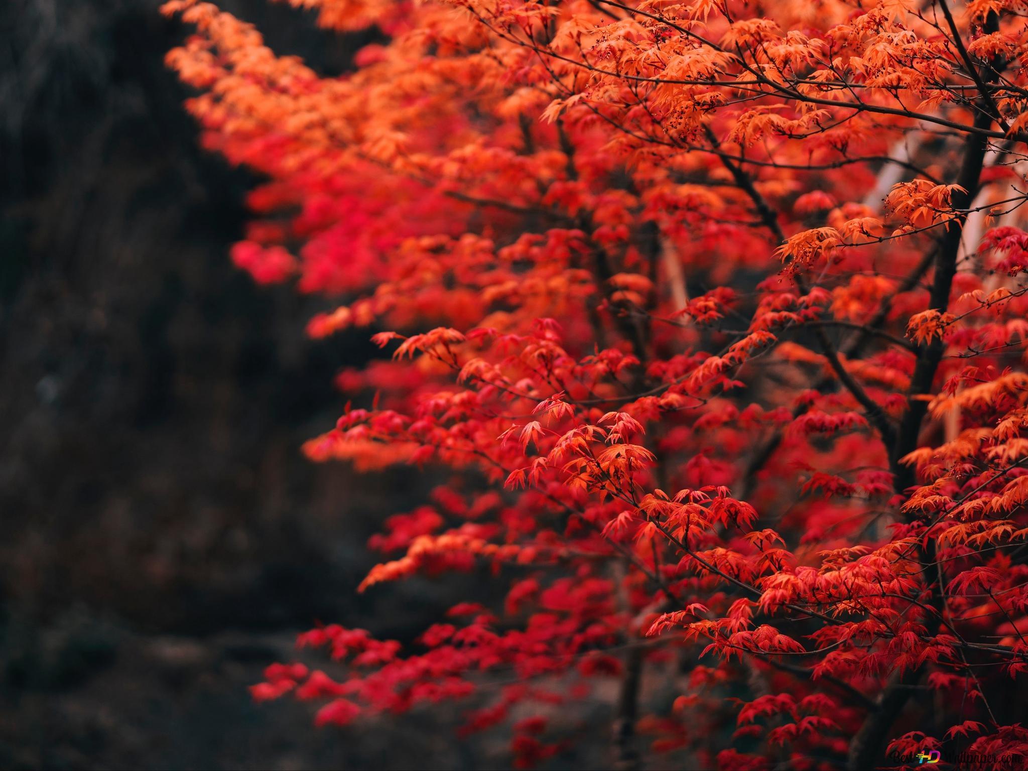秋の木 Hd壁紙のダウンロード