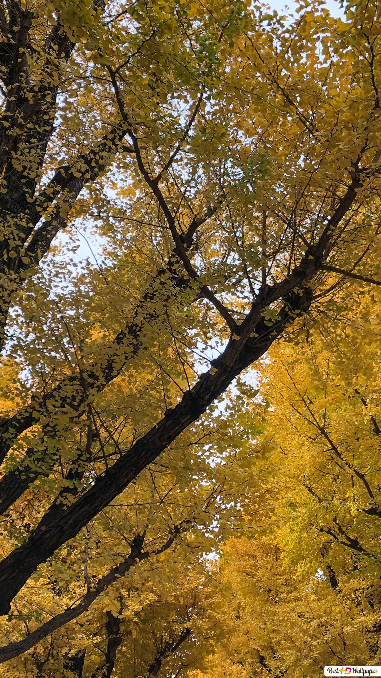 日本の秋 Hd壁紙のダウンロード