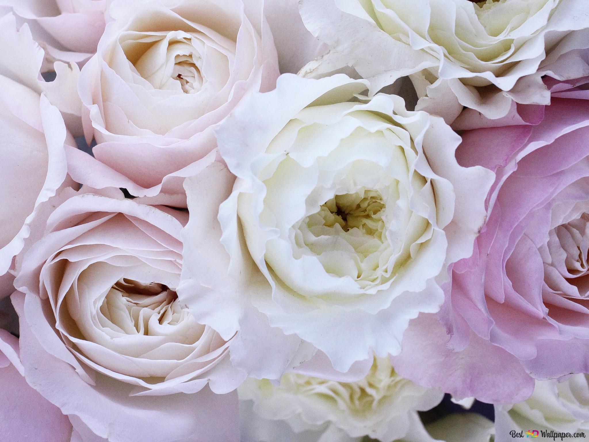 Descargar Fondo De Pantalla Rosas Blancas Hd